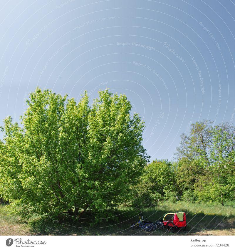 ausflugsziel Himmel Natur Baum Ferien & Urlaub & Reisen Pflanze Sommer Blatt ruhig Wald Erholung Umwelt Landschaft Wiese Freiheit Frühling Fahrrad