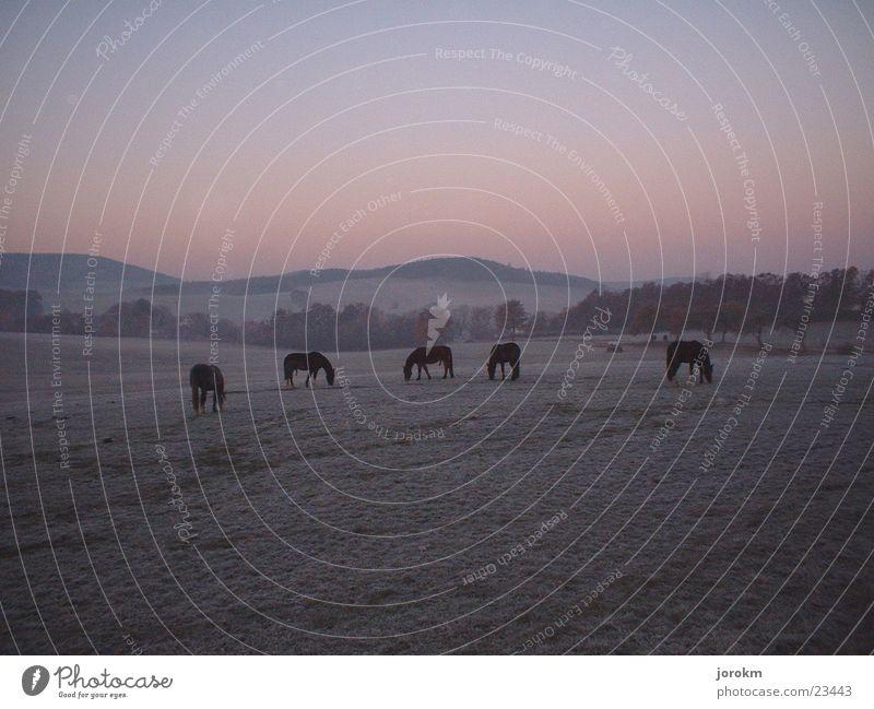 Morgendämmerung Raureif Pferd Weide Herbst Berge u. Gebirge