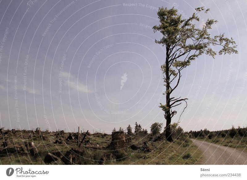 Tschüss Wald, Hallo Baum Himmel Natur blau alt grün Pflanze Sommer Umwelt Landschaft Holz Wege & Pfade Erde außergewöhnlich gefährlich trist