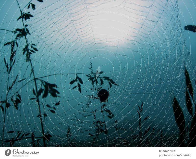 ...ins Netz gegangen Tier Wildtier Spinne 1 Natur Netzwerk blau Tau nass feucht Wassertropfen groß Mitte Spinnennetz Menschenleer Spanien Jakobsweg