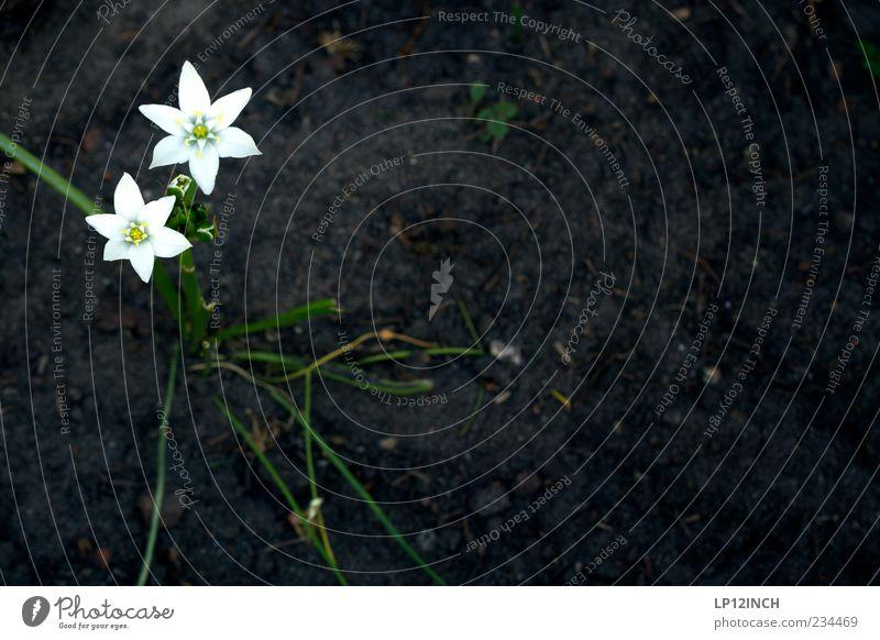 Untitled Garten Umwelt Natur Pflanze Erde Frühling Sommer Blume Feld Blühend trist trocken gelb schwarz weiß Traurigkeit Stern (Symbol) Farbfoto Außenaufnahme