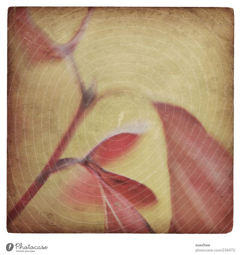 a bit of sadness .. Natur Pflanze Blatt Traurigkeit Stimmung Hintergrundbild dreckig Wachstum Stengel Textfreiraum