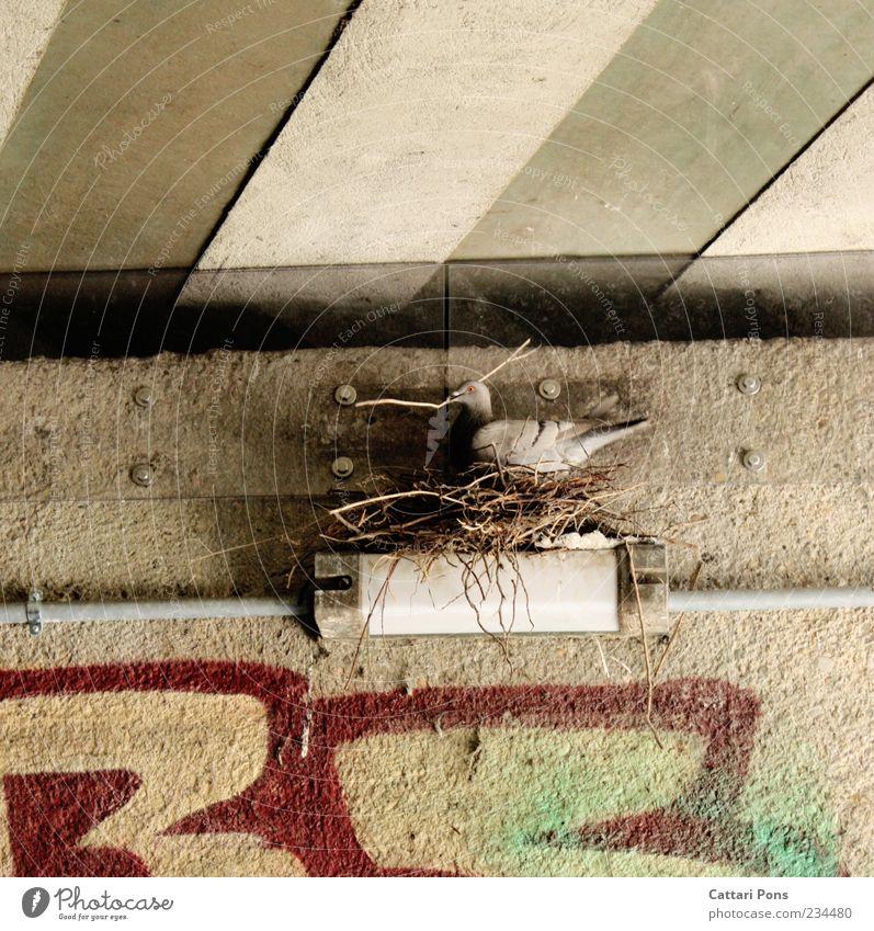 Urban Artist Tier Wildtier Vogel Taube 1 bauen stehen nerdig rebellisch Nestbau Lampe Zweige u. Äste Wand Graffiti Unterführung gestreift Schwarzweißfoto