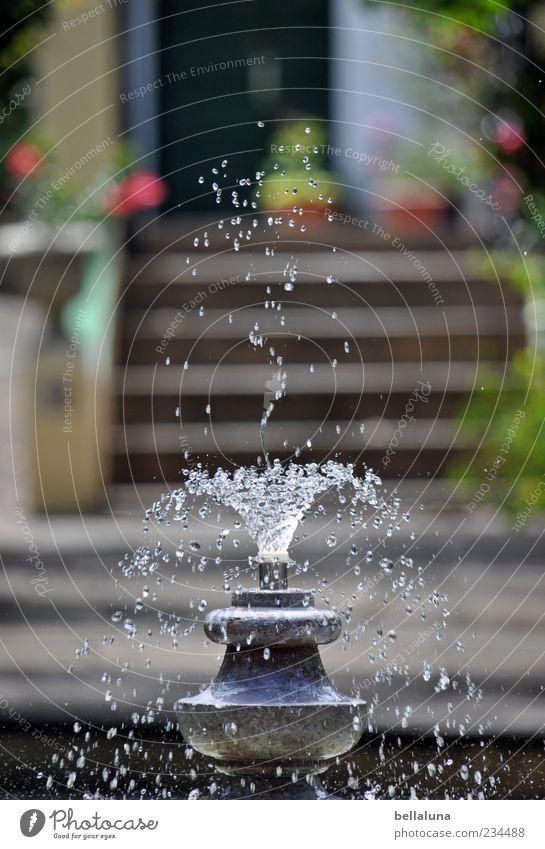 Suses Jungbrunnen Wasser Wassertropfen Schönes Wetter Pflanze Blume Garten Park schön Teneriffa Puerto de la Cruz Brunnen Springbrunnen sprudelnd Farbfoto