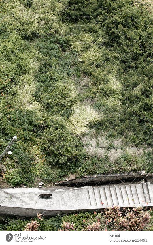Ein Hund geht Natur grün Pflanze Sommer Tier Einsamkeit Umwelt Gras Wege & Pfade gehen Treppe Sträucher einzeln Schönes Wetter Haustier