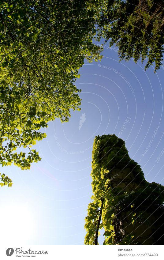 tree tower Umwelt Natur Landschaft Luft Himmel Wolkenloser Himmel Klima Wetter Schönes Wetter Pflanze Baum Sträucher Efeu Turm hoch grün Wachstum Blatt
