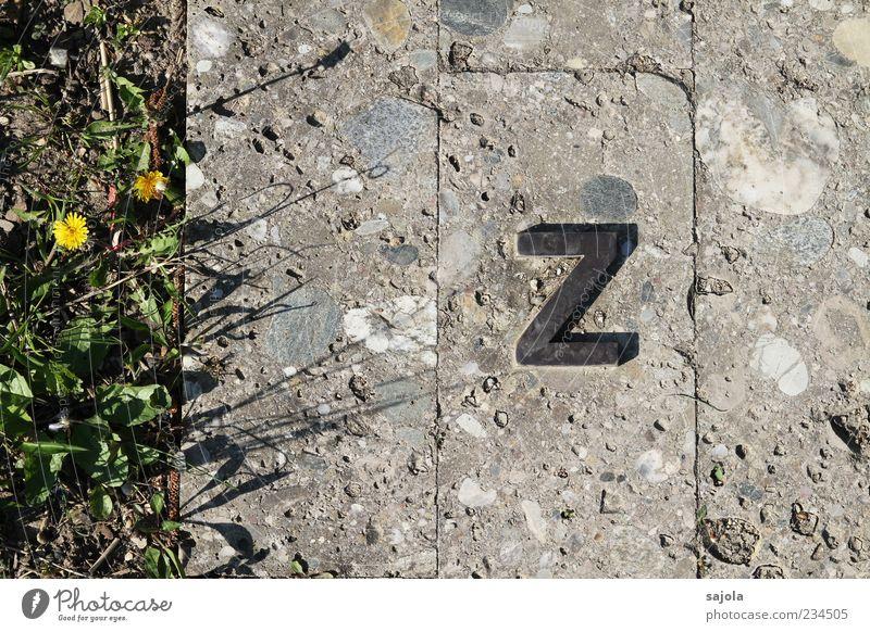 ... bis z Pflanze Blume Gras Stein Metall Linie Beton ästhetisch Schriftzeichen Boden Ende Buchstaben Bodenplatten Großbuchstabe