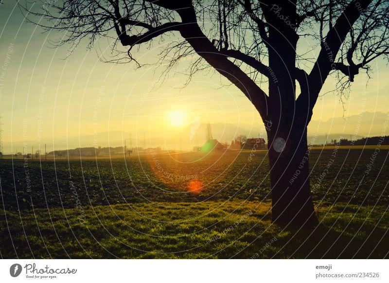 Guten Morgen Umwelt Natur Landschaft Erde Sonne Sommer Herbst Baum Gras Wiese Feld schön Wärme Blendenfleck Dorf Dorfwiese ländlich Heimat heimatlich Ruhepunkt