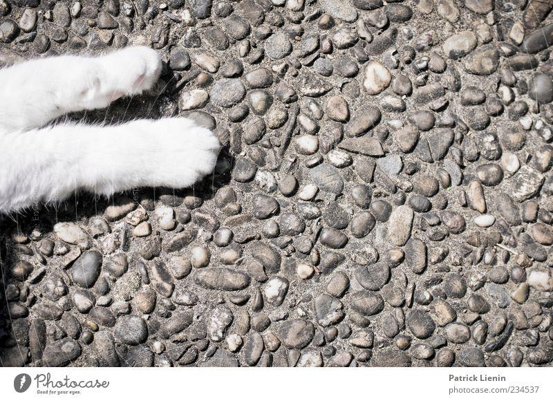lazy Kitty Tier Haustier Katze Pfote 1 liegen schlafen ästhetisch niedlich schön Stimmung Zufriedenheit Geborgenheit Einsamkeit Erholung Beine Steinplatten