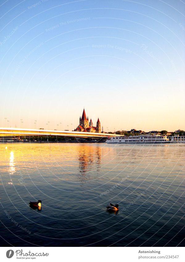 Enten auf der Donau Umwelt Natur Landschaft Luft Wasser Himmel Wolkenloser Himmel Sommer Wetter Schönes Wetter Fluss Stadt Hauptstadt Kirche Turm Bauwerk