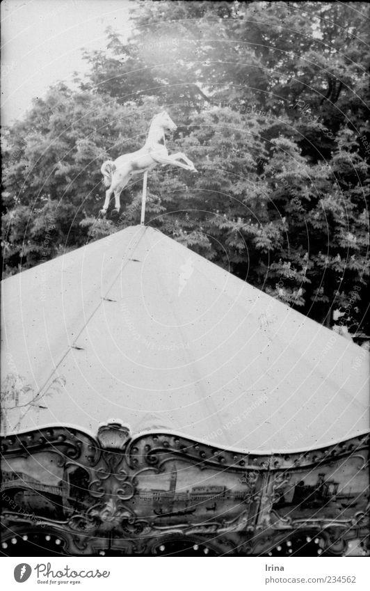 Montmartre White Beauty II Paris Hauptstadt Sehenswürdigkeit Karussell Karussellpferd Kindheit analog drehen alt Pferd Sträucher Zweige u. Äste Menschenleer
