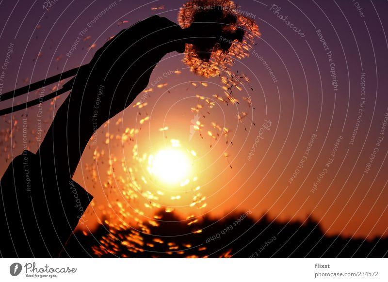 Sonnenkraft Natur Hand Zufriedenheit Kraft fliegen Romantik festhalten Schönes Wetter Löwenzahn Samen Gegenlicht Optimismus Sonnenuntergang Frühlingsgefühle