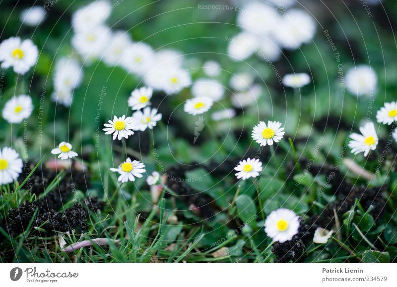 We gathered in spring Umwelt Natur Pflanze Frühling Wetter Blume Blüte Grünpflanze Wildpflanze Freundlichkeit Fröhlichkeit frisch schön Originalität weiß
