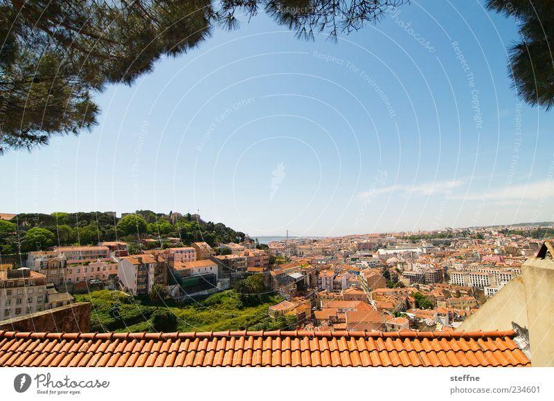 Miradouro da Graca Stadt Baum Sommer Haus Ferne Dach Schönes Wetter Aussicht Backstein Skyline Stadtzentrum Hauptstadt Wolkenloser Himmel Portugal Altstadt Lissabon