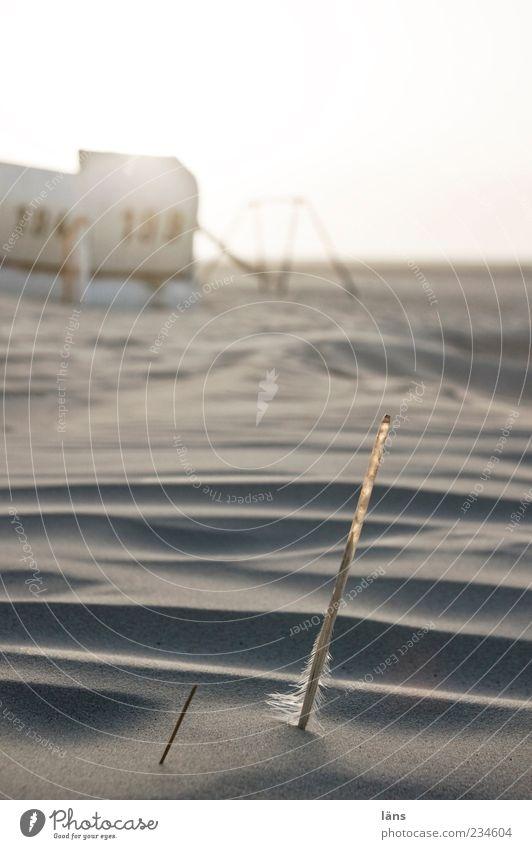 Spiekeroog | kieloben Erholung ruhig Strand Natur Landschaft Himmel Sonnenaufgang Sonnenuntergang Schönes Wetter Küste Nordsee Strandkorb Schaukel Feder Kiel