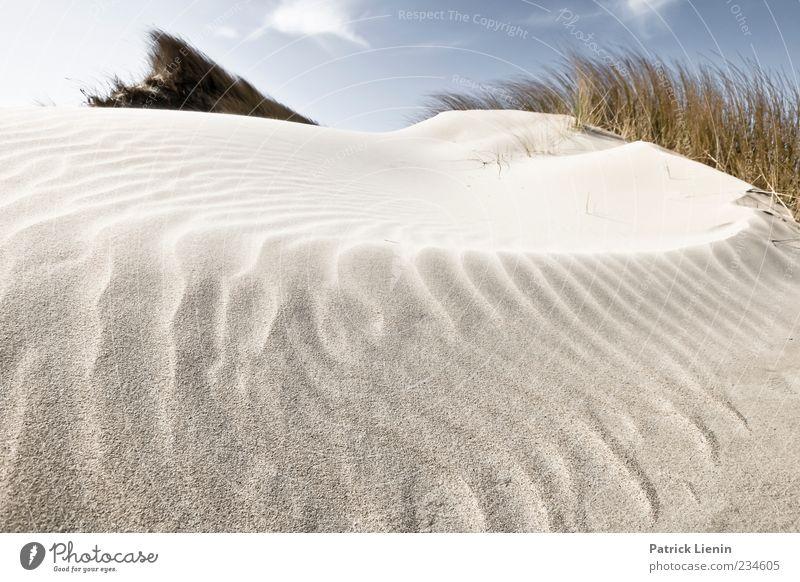 Spiekeroog | Weil es schön war Himmel Natur blau Pflanze Strand Blatt Wolken ruhig Umwelt Landschaft Sand Küste Luft Stimmung Erde Wetter