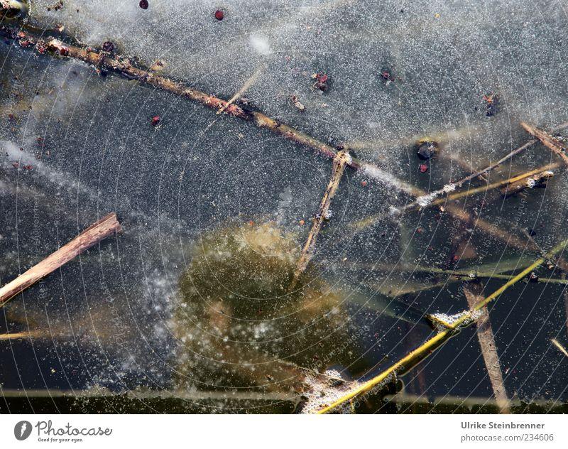 Naturkunst 3 Pflanze Urelemente Wasser Winter Eis Frost Gras Moos Seeufer Moor Sumpf Teich warten natürlich stagnierend erstarren gefroren erfrieren Halm