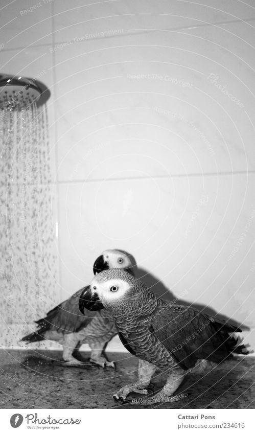 Es kommt von links! Wasser Tier Schwimmen & Baden Vogel Zusammensein Tierpaar stehen Wassertropfen beobachten Reinigen Bad Fliesen u. Kacheln Haustier Waschen Dusche (Installation) gefiedert