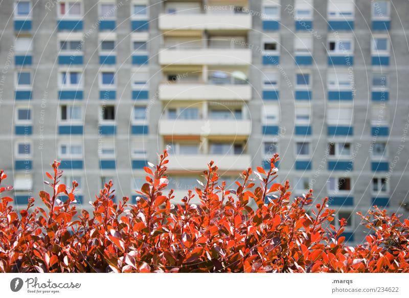 Vorgarten Lifestyle Wohnung Pflanze Blatt Architektur Mehrfamilienhaus Fassade Balkon Fenster Stadt trist Farbfoto Außenaufnahme Menschenleer Tag