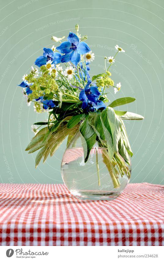 vom wegesrand Lifestyle Stil Design Tisch Pflanze Blume Blatt Blüte Wildpflanze Feld ästhetisch schön kariert rot weiß grün Kornblume Gänseblümchen Vase Wasser