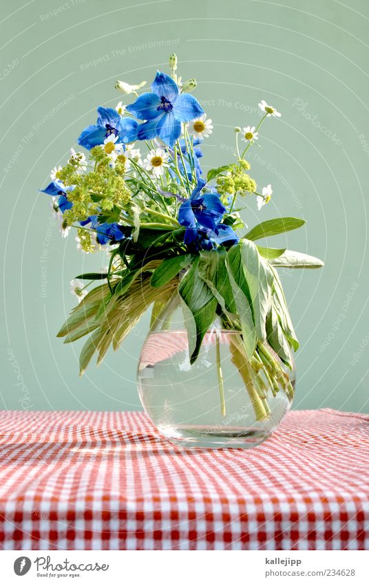 vom wegesrand Wasser weiß grün schön rot Pflanze Blume Blatt Blüte Stil Glas Feld Design ästhetisch Tisch