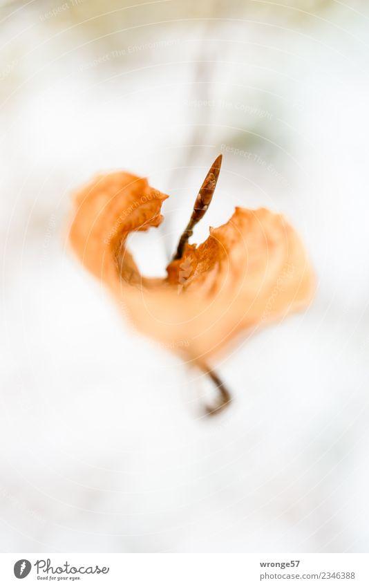 Jahreszeiten | trockenes Blatt II Natur Pflanze Frühling Herbst Sträucher Wald braun vertrocknet Hochformat Zweige u. Äste herbstlich Herbstlaub Nahaufnahme