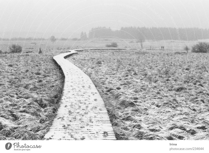 19.02.11 (P+I=15) Natur Landschaft Nebel Schnee Hochmoor Wege & Pfade Steg Ferne wandern Naturschutzgebiet Moor Holzweg analog Schwarzweißfoto
