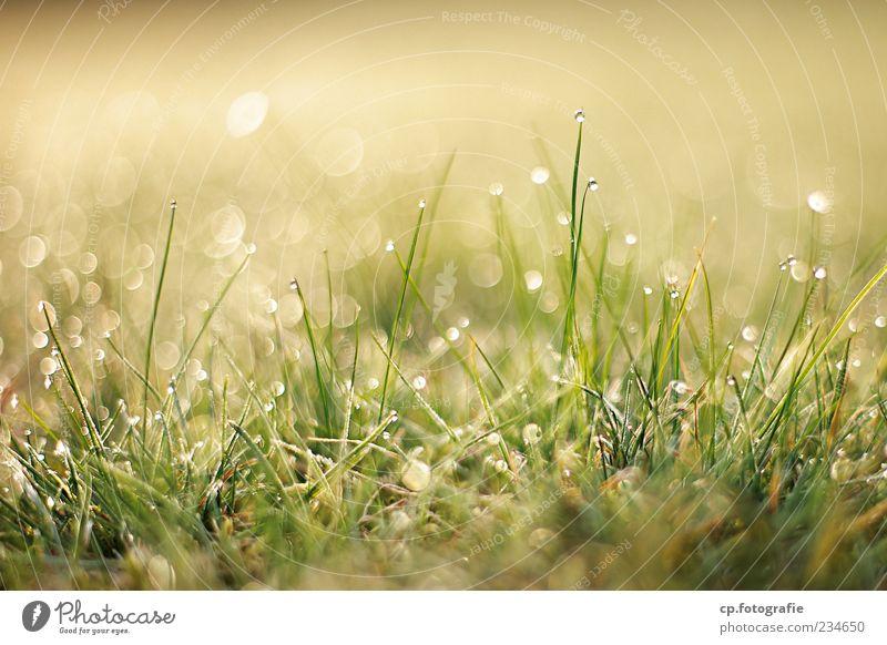 Ambrossia Natur Pflanze Wassertropfen Sonne Sonnenlicht Frühling Sommer Schönes Wetter Gras Grünpflanze Wiese Wachstum Farbfoto Außenaufnahme Morgen