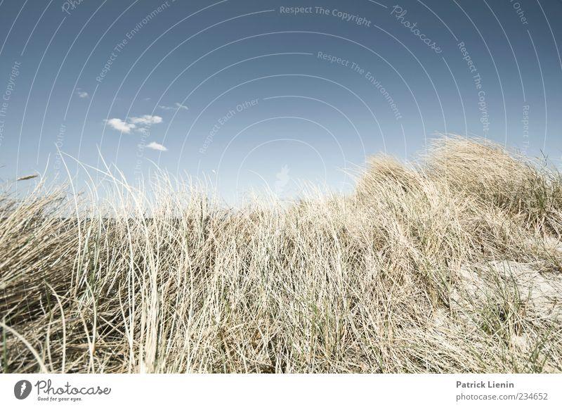 Lass die Sonne rein Himmel Natur schön Ferien & Urlaub & Reisen Pflanze Sommer Meer Strand Umwelt Landschaft Freiheit Küste Luft Wetter Wind Klima