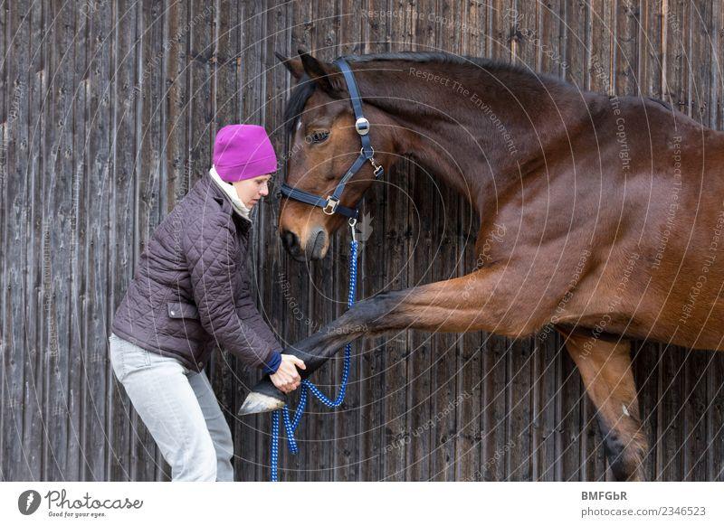 Streching für Pferde Freizeit & Hobby Reiten Sport Fitness Sport-Training Reitsport Tierarzt Mensch feminin Frau Erwachsene 1 45-60 Jahre Mütze Haustier