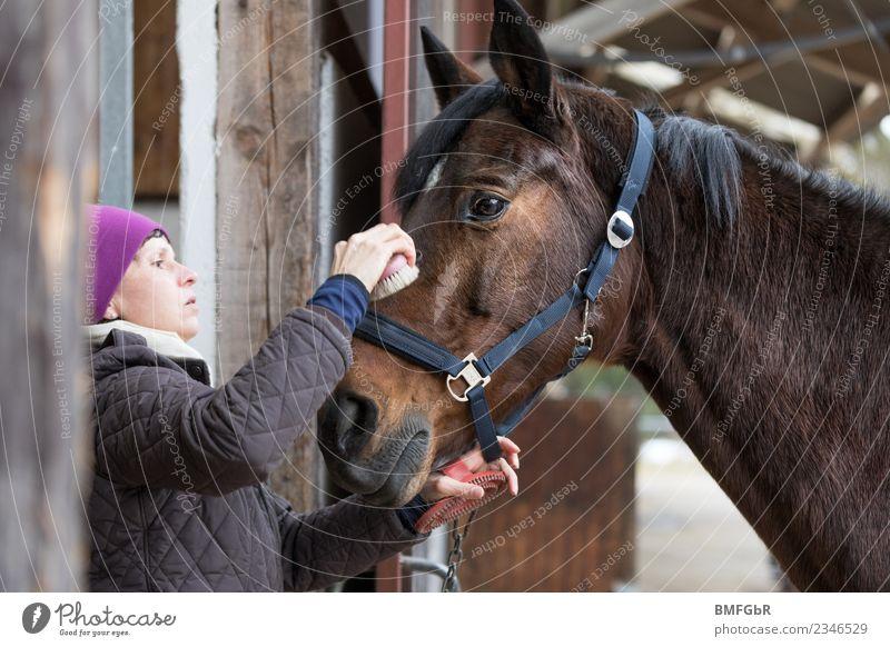 Wenn Pferde schnurren könnten... Frau Mensch Erholung Tier ruhig Erwachsene Sport feminin Freizeit & Hobby genießen Reinigen Haustier Vertrauen Mütze Jacke