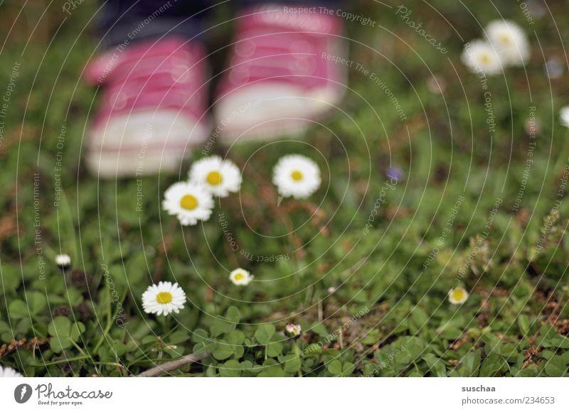 soll ich oder soll ich sie nich ... Natur grün Pflanze Sommer Blume Wiese Gras Frühling Blüte Fuß rosa stehen Blühend Gänseblümchen Turnschuh Licht