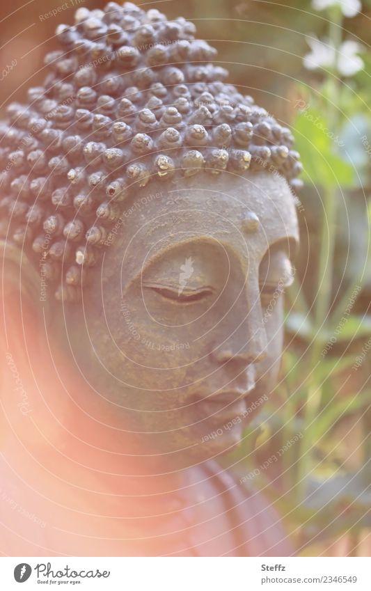 Stille im Garten harmonisch ruhig Meditation Natur Pflanze schön grün orange Stimmung achtsam Gelassenheit Selbstbeherrschung Weisheit Glaube Lichtstimmung