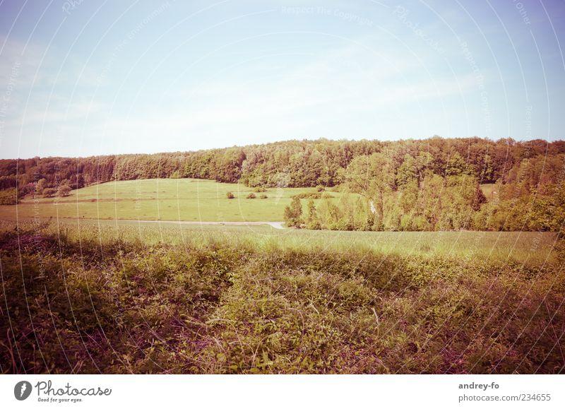 Sommerlandschaft Landschaft Luft Himmel Horizont Schönes Wetter Wiese Feld Wald Natur Umwelt Gras Baum Panorama (Aussicht) Gedeckte Farben grün blau braun