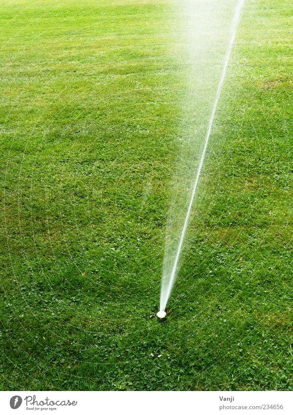 Künstliche Ernährung Natur Wasser Umwelt Wiese Gras Rasen gießen Wasserstrahl Bewässerung Rasensprenger