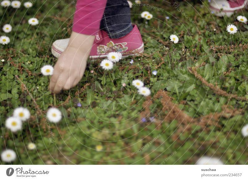 .. na gut, aber nur eins. Mädchen Hand Finger Fuß 1 Mensch 3-8 Jahre Kind Kindheit Natur Pflanze Frühling Sommer Schönes Wetter Blüte Wiese pflücken Blume