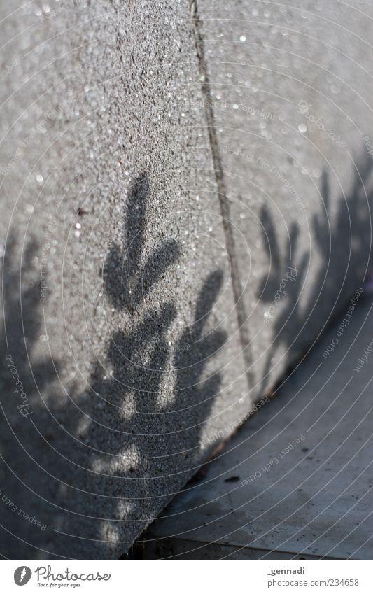 Betonwald Natur Pflanze Blatt grau natürlich modern Asphalt Lichtspiel Schattenspiel