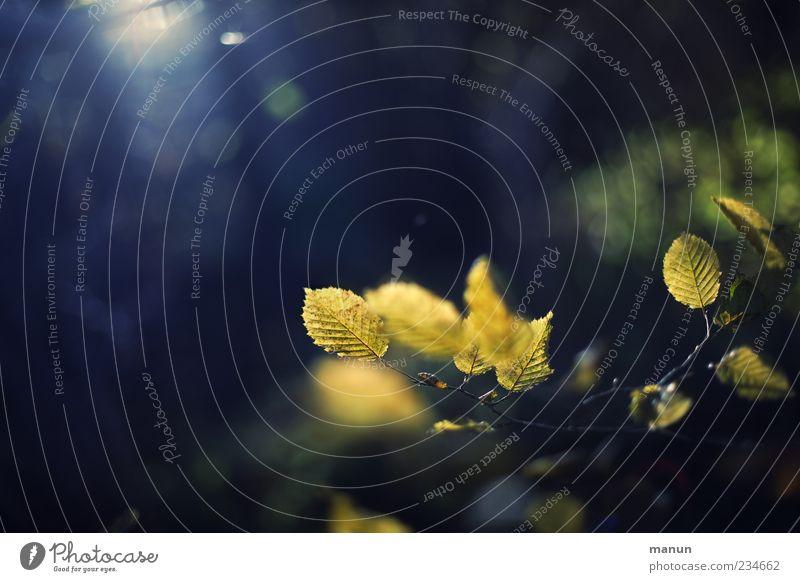 Herbstfoto Natur Blatt gelb natürlich authentisch Herbstlaub herbstlich Herbstfärbung Herbstbeginn