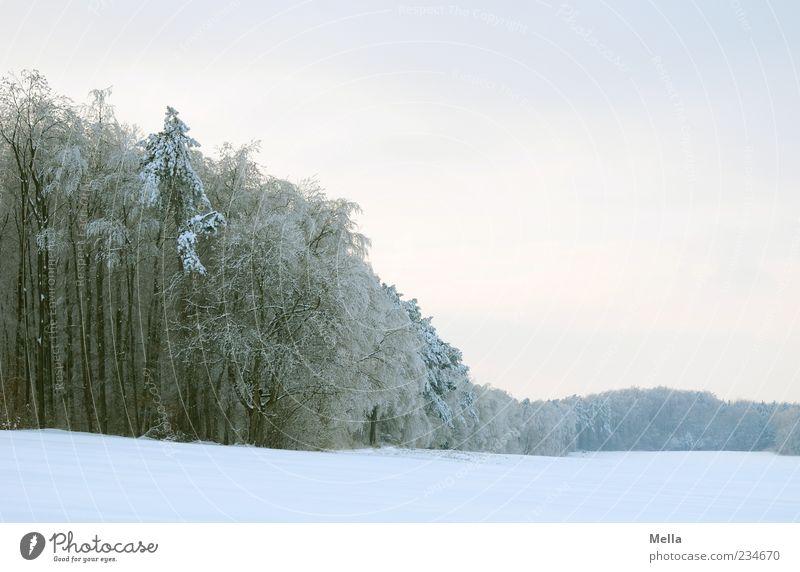 Eiszeit Umwelt Natur Landschaft Winter Klima Schnee Baum Feld Wald hell kalt natürlich Farbfoto Außenaufnahme Menschenleer Textfreiraum rechts Textfreiraum oben