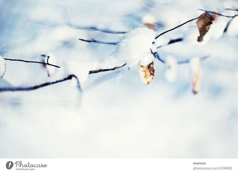 Winterfoto Natur Eis Frost Schnee Baum Blatt Zweige u. Äste authentisch hell kalt natürlich schön blau weiß Farbfoto Außenaufnahme Menschenleer