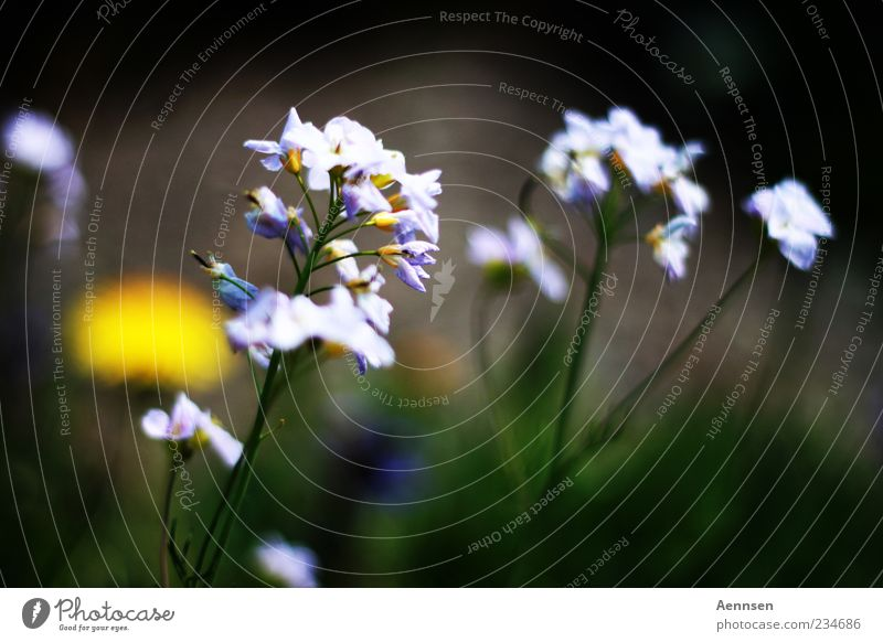 verblümt Natur schön Pflanze Sommer Blume ruhig Frühling Blüte Wachstum Schönes Wetter violett Blühend Duft Frühlingsgefühle Perspektive Umwelt
