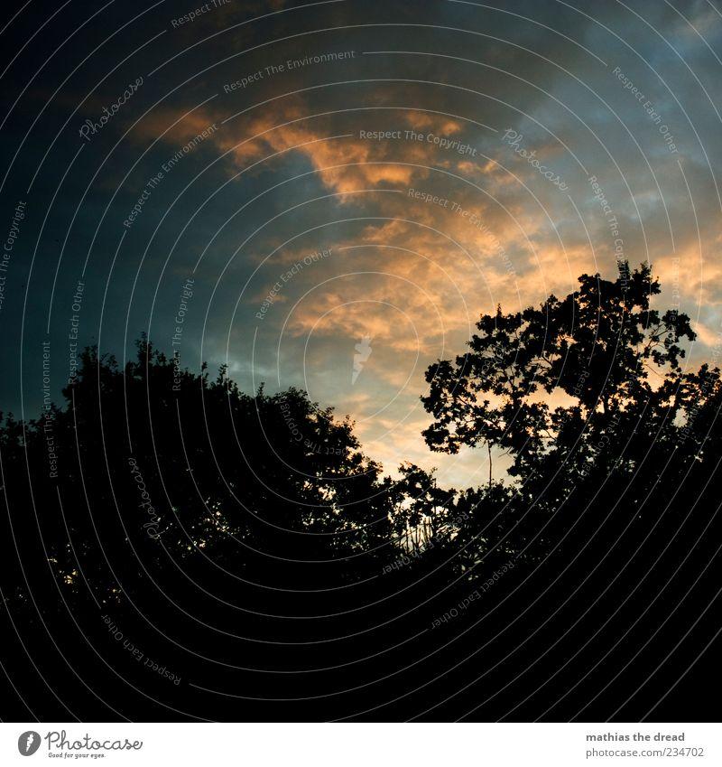 ABENDSTIMMUNG Himmel Natur schön Baum Pflanze Blatt Wolken ruhig Erholung Umwelt Landschaft Zufriedenheit Ast Idylle Schönes Wetter Baumkrone
