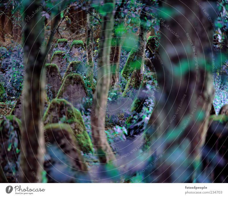 Im Hürtgenwald Natur Baum Moos Wildpflanze Wald bizarr geheimnisvoll stagnierend Vergangenheit Vergänglichkeit Wandel & Veränderung Zeit Ardennen Zauberwald