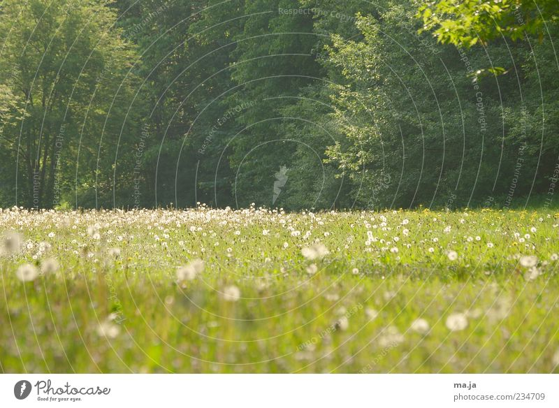 Hinterm Hochhaus Natur weiß grün Baum Pflanze Blume Umwelt Landschaft Wiese Gras Frühling Blüte Wetter Sträucher Schönes Wetter Löwenzahn