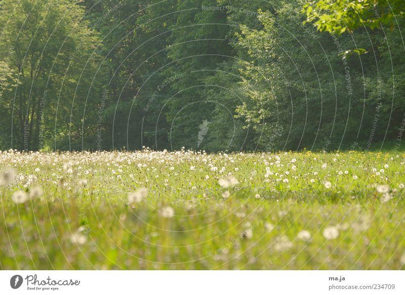Hinterm Hochhaus Umwelt Natur Landschaft Pflanze Frühling Wetter Schönes Wetter Baum Blume Gras Sträucher Blüte Grünpflanze Wildpflanze Löwenzahn Wiese grün