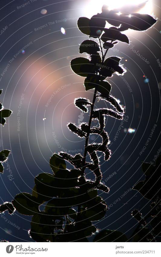 daydream Pflanze Sommer Blatt glänzend außergewöhnlich Schönes Wetter fantastisch Stengel Inspiration Schatten
