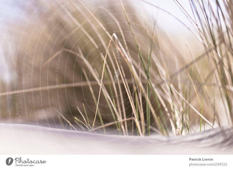 Spiekeroog | Clothes of Sand Natur schön Pflanze Freude Strand Einsamkeit Erholung Umwelt Landschaft Gras Küste Stil träumen Stimmung Urelemente