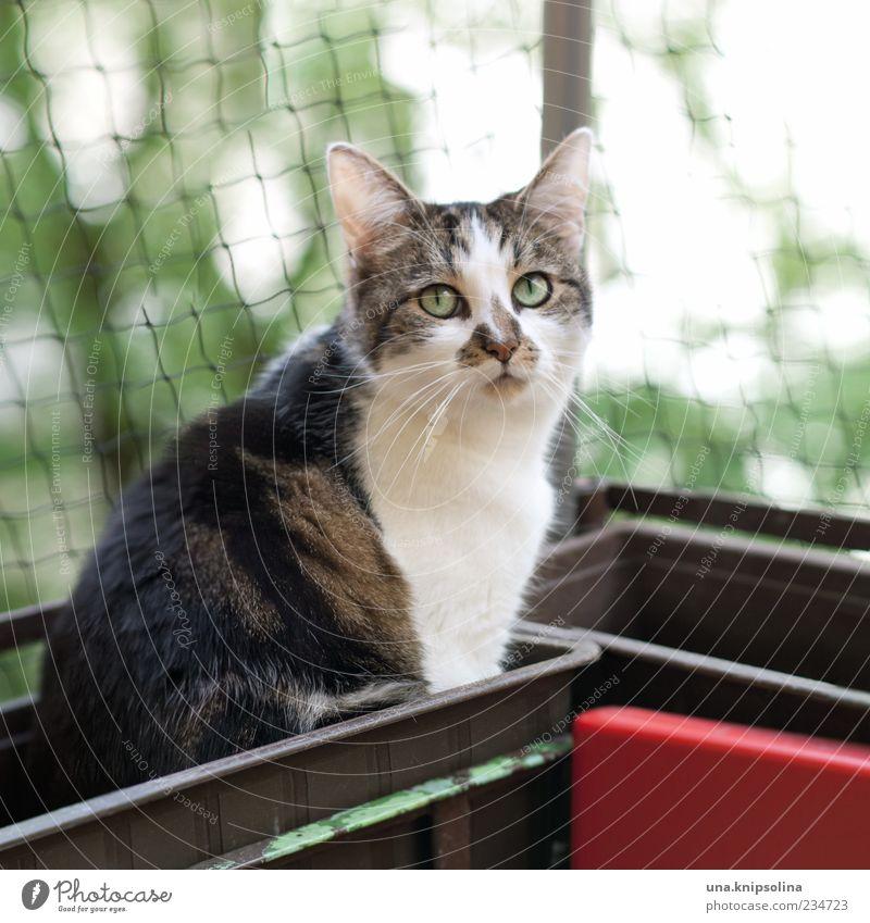 blumenkasten-lotta Katze Natur Baum Tier sitzen niedlich beobachten Fell Netz Balkon Haustier Hauskatze Schnurrhaar Schlaufe Blick nach oben Blumenkasten