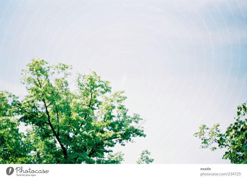 senkrechtstarter Natur Pflanze Luft Himmel Sonnenlicht Frühling Schönes Wetter Baum Blatt Bewegung Duft leuchten Tanzen Wachstum frei frisch hoch natürlich