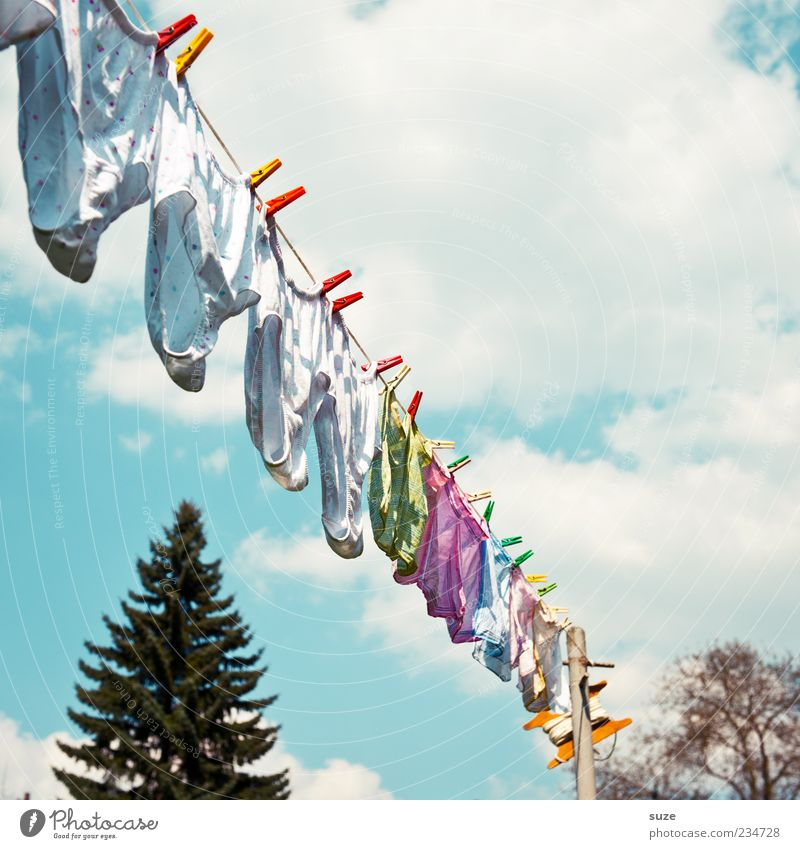 Mo, Di, Mi, Do, Fr ... Himmel Sommer Wolken Wind frisch Häusliches Leben Sauberkeit Schönes Wetter Tanne diagonal Duft hängen Wäsche Unterwäsche trocknen Wäscheleine